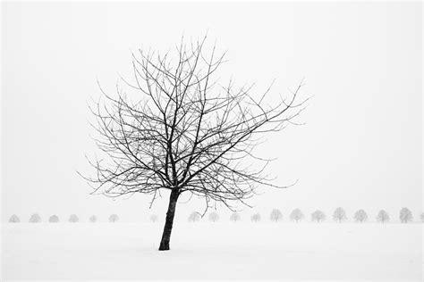 winter white tree bare tree in winter wonderful black and white snow
