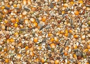 Pigeon Feed Belgium Pigeon Mixes Available In The Usa Through Pfs