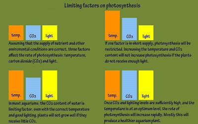 what factor affects the color of a fhs bio wiki factors effecting the rate of photosynthesis