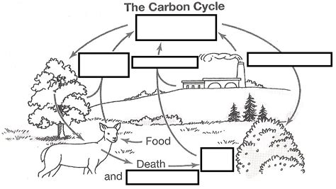 carbon cycle diagram worksheet wizer me free interactive carbon cycle biology cycles