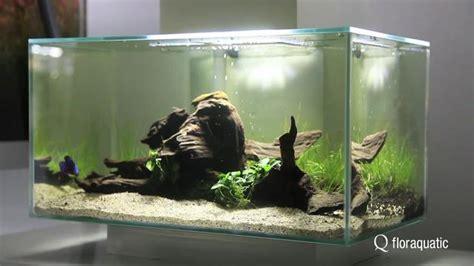 Lu Aquarium Celup conseils pour nano iwagumi