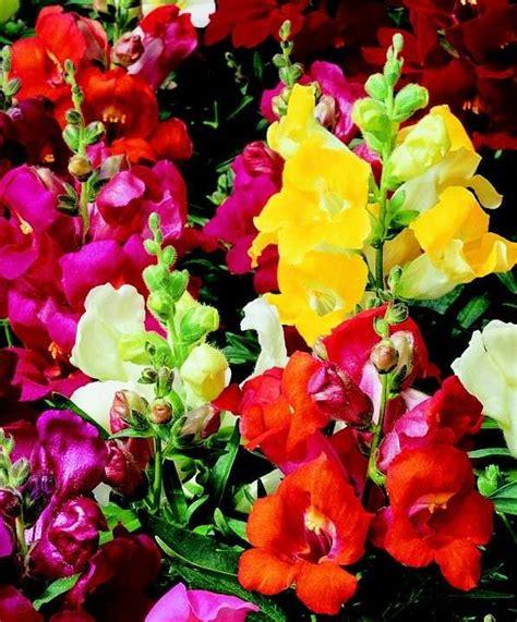bocca di fiori il significato dei fiori foto 33 40 tempo libero pourfemme