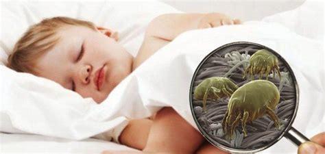 acari materasso punture l acaro della polvere un allergene di casa