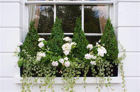 Good Flowers For Window Boxes - window box ideas 13 colourful gardening ideas for window boxes good housekeeping