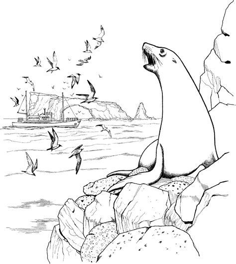 sea lion coloring pages printable sea lion on rocks