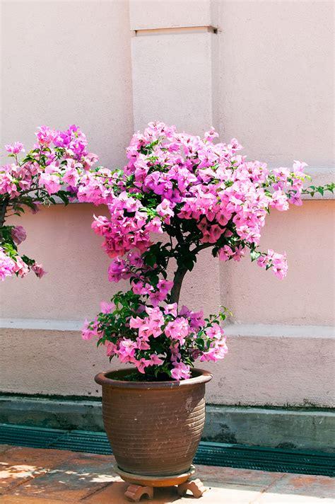 pot plants  sun  shade burkes backyard flowers