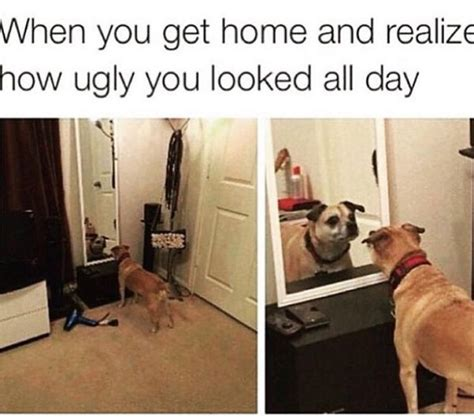 Dog Lover Meme - love dogs love memes heeeere s dog memes thechive