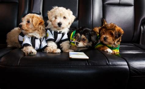 uber puppies uber is delivering puppies to offices today