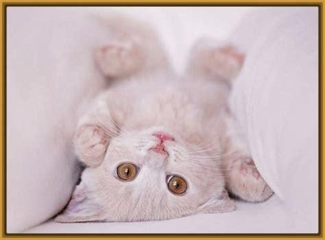 imagenes de niños tiernos orando imagenes de gatitos tiernos bebes con frases archivos