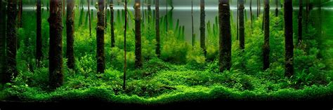 aquascape ada aquatic eden aquascaping aquarium blog