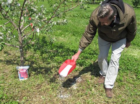 compost for fruit trees how to fertilize fruit trees properly