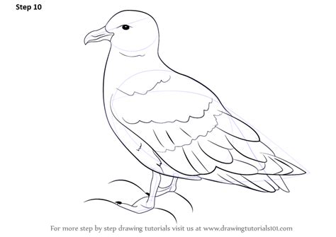 how to draw sea birds learn how to draw a skua seabirds step by step drawing