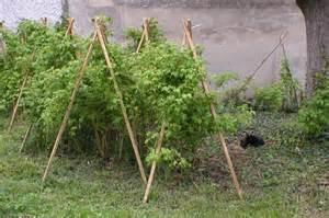 les framboisiers visitez le jardin de gaby journal des
