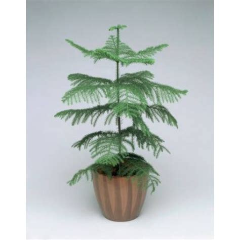 1 christmas tree send christmas tree for any occasion