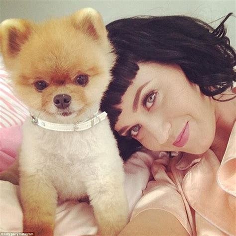 katy perry puppy jiff the counts katy perry among friends and has two guinness world records