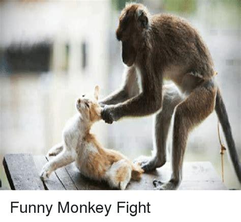 Funny Fight Memes - 25 best memes about funny monkey funny monkey memes