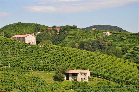 best wine from italy where to find the best wineries in italy savored sips