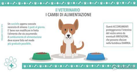 alimentazione di un cucciolo di veterinario i cambi di alimentazione nel cucciolo dogalize