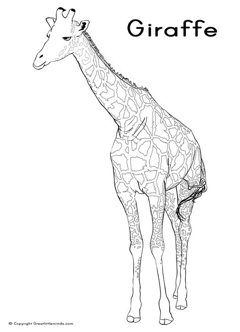 giraffe habitat coloring pages giraffe colouring page