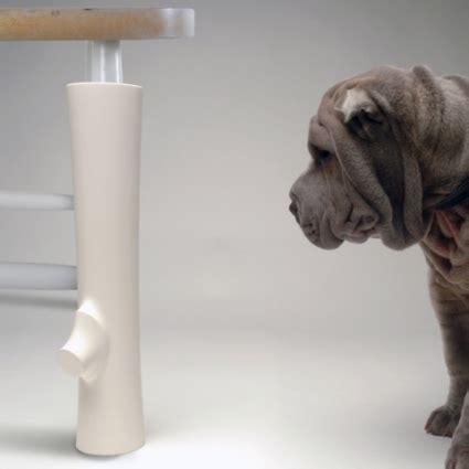 puppy        chew leg