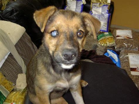 Dogs For Blind Adoption sani blind rescue uk