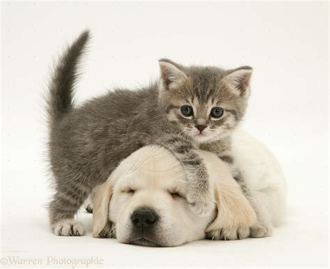 baby puppies and kittens gallery for baby kittens and puppies sleeping o8hhmnvn jpg litle pups