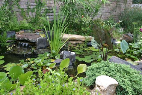 landscape ideas for backyard landscaping backyard landscaping ideas el paso tx