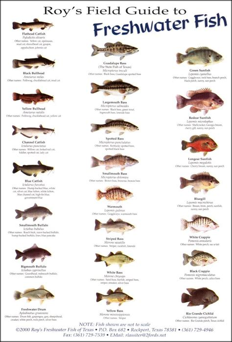field guide to the fishes of the orinoco and guianas princeton field guides books roy s field guides birds fish and sea shells to be