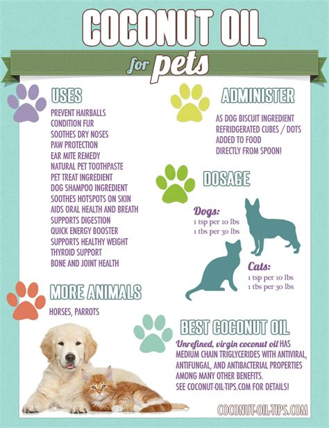 is coconut safe for dogs 11 amazing reasons to use coconut every day saturday