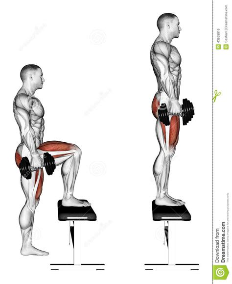 knee on bench dumbbell exercising pacing with dumbbells on bench stock