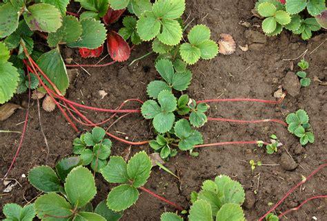 bagaimana  reproduksi tumbuhan myrightspotcom