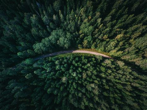 nature aerial view road trees forest wallpapers hd
