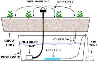 sistem drip  irigasi tetes hidroponik bibit