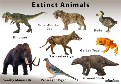 extinctanimalsorg definition of extinction and list of