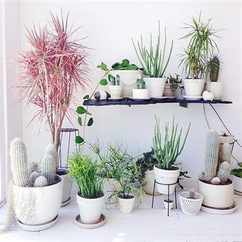 home plant how to decorate your interior with green indoor plants and