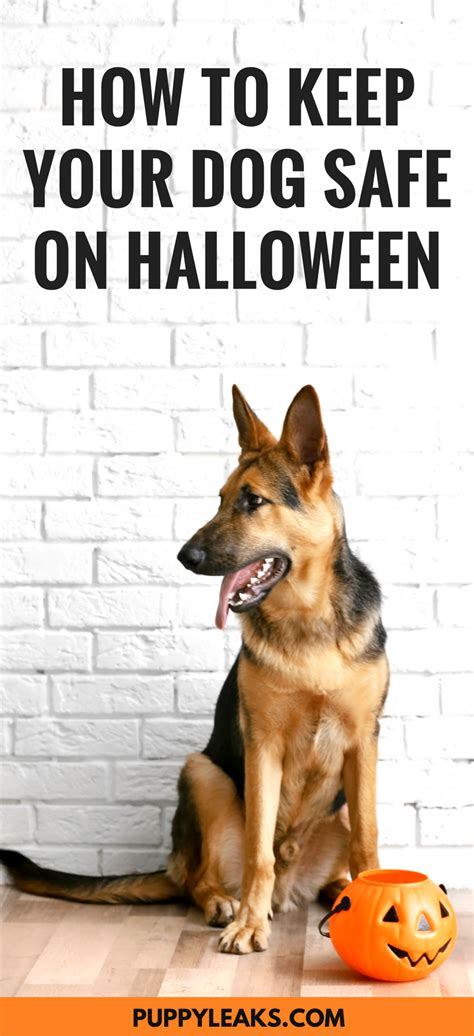how to stop dog barking when left alone how to stop dog barking when left alone 100 how to stop