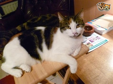 rehome my due to ill health i need to rehome my cat witham essex pets4homes
