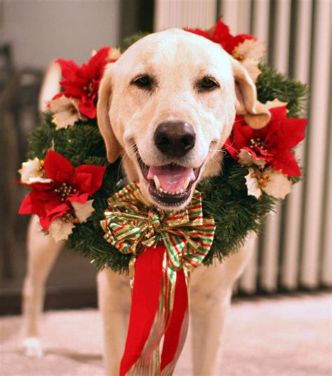 dog wreath pictures   images  facebook tumblr pinterest  twitter
