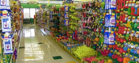 puppy stores in florida pictures for pet supplies plus in fl 33021