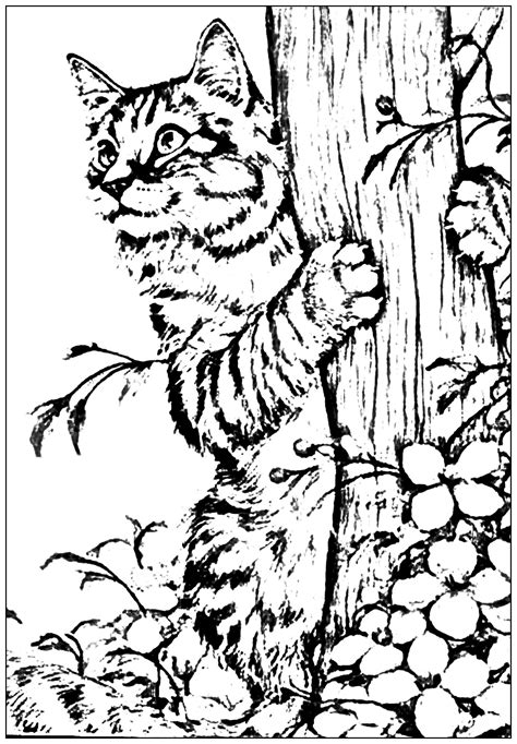 garden creatures coloring pages animals coloring pages for adults coloring page kitten