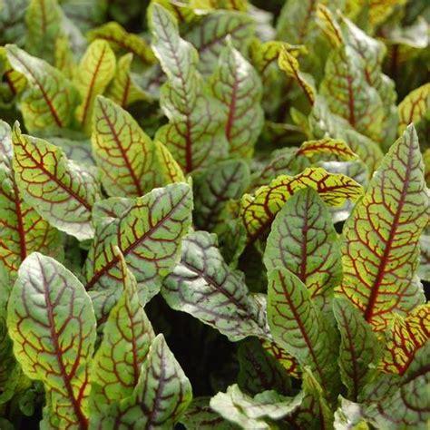 Que Peut On Planter En Septembre by Quelles Plantes Aromatiques Planter En Septembre