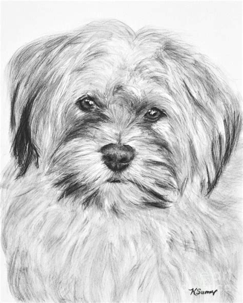 pug x shih tzu temperament 1000 images about toby on puppys canvas prints and poodle mix