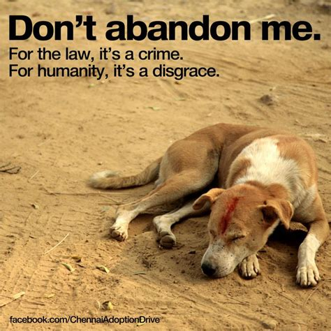 With Abandon animal abandonment is when someone who owns an animal dec