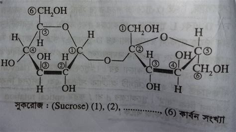 carbohydrates organic chemistry organic chemistry carbon numbering in carbohydrates