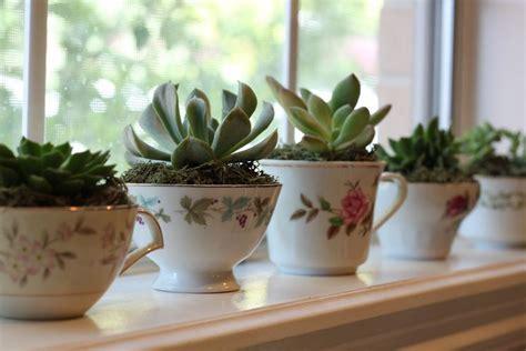 piante da davanzale piante grasse appartamento piante grasse piante grasse