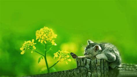wallpaper anak kucing lucu  menggemaskan terbaru