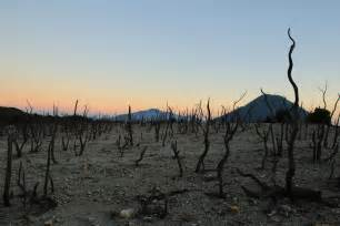 the papandayan dead forest java indonesia