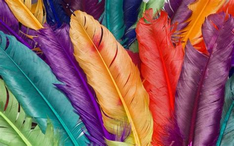 colorful feathers colorful feathers fabulous feathered birds