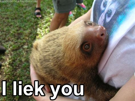 Cute Sloth Meme - i like you too my friend funny pictures quotes pics