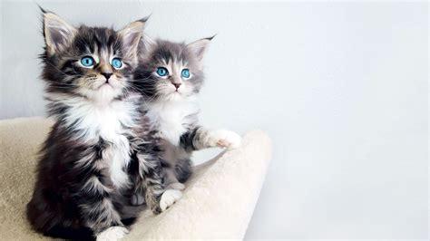 beautiful kittens good kitten wallpaper full hd pictures